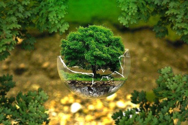 Giornata Mondiale delle Foreste, l'importanza della biodiversità